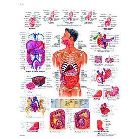 Il sistema digestivo - tavola didattica 50x67 cm