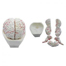 Cervello in 8 parti
