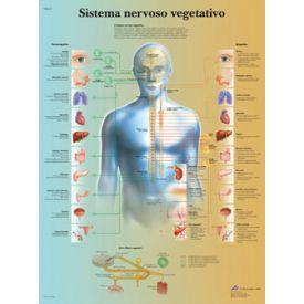 Il sistema nervoso vegetativo - tavola didattica laminata 50x67 cm